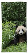 Giant Panda Bath Towel