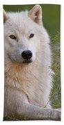 Arctic Wolf Bath Towel