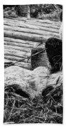 3722-panda -  Graphite Drawing 2 Sl Bath Towel