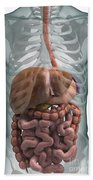 The Digestive System Bath Towel
