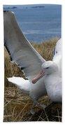 Albatros Royal Diomedea Epomophora Bath Towel
