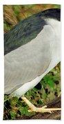 Black-crowned Night-heron Bath Towel