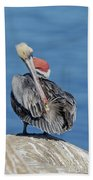 Brown Pelican Preening Bath Towel