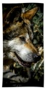 Mexican Grey Wolf Bath Towel
