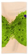 Mitosis, Late Telophase, Tem Bath Towel