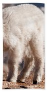 Mountain Goat Kid On Mount Evans Bath Towel