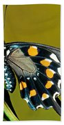 Pipevine Swallowtail Butterfly Bath Towel