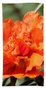 Portulaca Named Sundial Tangerine Bath Towel