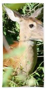 White Tailed Deer Portrait Bath Towel