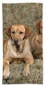 Yellow Labrador Retrievers Bath Towel