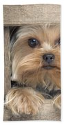 Yorkshire Terrier Dog Bath Towel