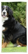 Bernese Mountain Dog Bath Towel