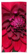 Dahlia Named Nuit D'ete Bath Towel
