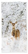 Doe Mule Deer In Snow Bath Towel