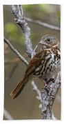 Fox Sparrow Bath Towel