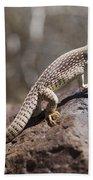 Mojave Desert Iguana Bath Towel