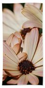 Osteospermum Named Sunadora Palermo Bath Towel