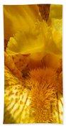 Tall Bearded Iris Named Saharan Sun Bath Towel