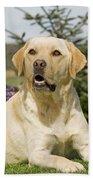 Yellow Labrador Bath Towel