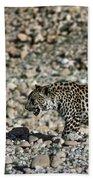 Arabian Leopard Panthera Pardus Bath Towel