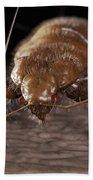 Bedbug Cimex Lectularius Bath Towel