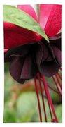 Fuchsia Named Roesse Blacky Bath Towel