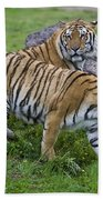 Siberian Tigers, China Bath Towel