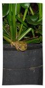 Tree Frog Bath Towel