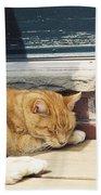 #665 03 Catnap  Hand Towel