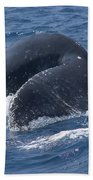 Humpback Whales Bath Towel