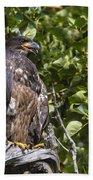 Juvenile Bald Eagle Bath Towel