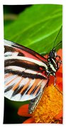 Piano Key Butterfly Hand Towel