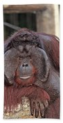 Portrait Of A Large Male Orangutan Bath Towel