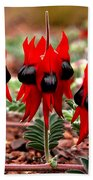 Sturt's Desert Pea Outback South Australia Bath Towel