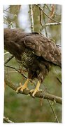 Buse Variable Buteo Buteo Bath Towel
