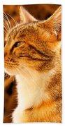 Cat Bath Towel