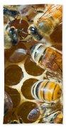 Honey Bees In Hive Bath Towel