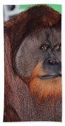 Portrait Of A Large Male Orangutan Bath Towel