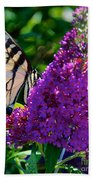 Yellow Tiger Swallowtail Papilio Glaucus Butterfly  Bath Towel