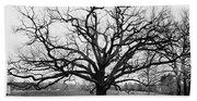A Bare Oak Tree Hand Towel