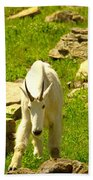 A Goat Coming Down The Trail Bath Towel