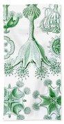 A Collection Of Stauromedusae Bath Towel
