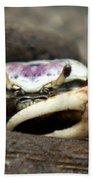 A Fiddler Crab Around Hilton Head Island Bath Towel