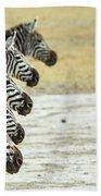 A Grevys Zebra In Ngorongoro Crater Bath Towel