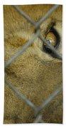 A Lions Eye Bath Towel