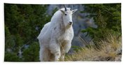 A Mountain Goat Stands On A Grassy Hand Towel