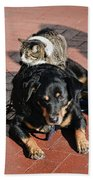 A Mouse On A Cat On A Dog In Santa Bath Towel