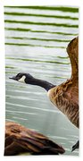 A Pair Of Canada Geese Landing On Rockland Lake Hand Towel