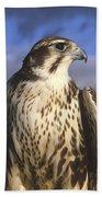 A Prairie Falcon At Dusk Bath Towel