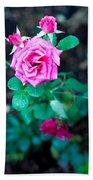 A Rose Blooms Bath Towel
